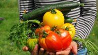 Venez rejoindre le jardin de la Farandole ! Les bénévoles vous accueilleront pour jardiner ensemble, discuter, passer un moment convivial, etc.